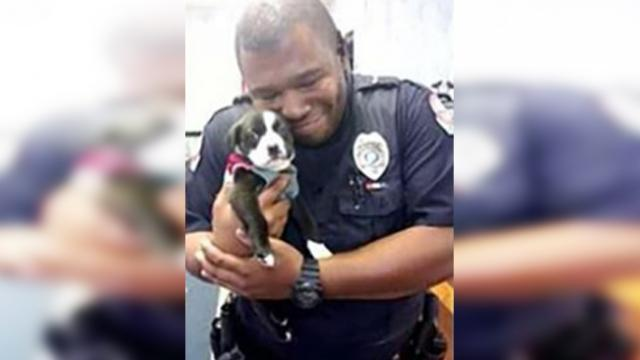 Cop responds to call at animal shelter, and then he can't put down tiny rescue pup
