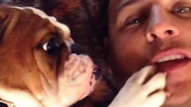 Adorable bulldog puppy wants more kisses