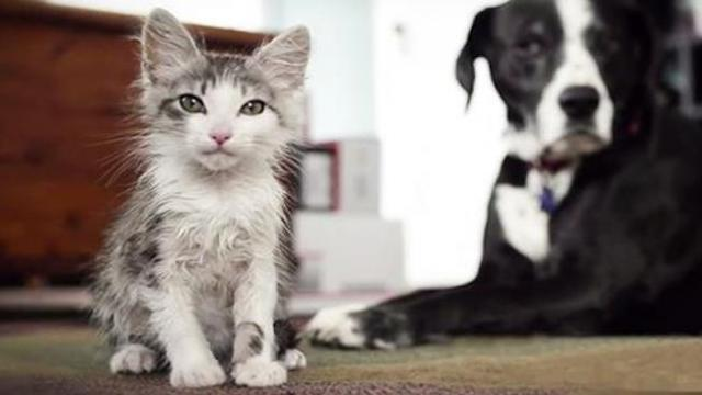 How this rescued kitten won over the family dog leaves a smile