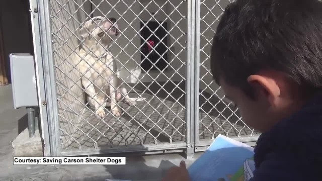 Boy Reads to Shelter Dogs so They Won't Feel Lonely