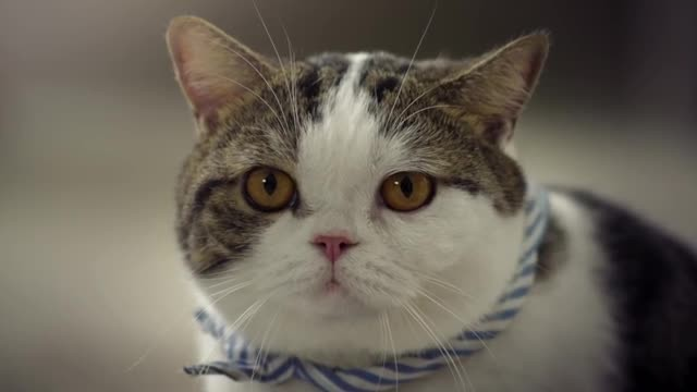 Company employed gangster cats for their commercial and is the funniest thing you've ever seen