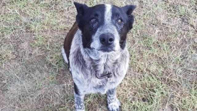 Seventeen-year-old dog loyally stays with 3-year-old girl lost in woods for more than 15 hours