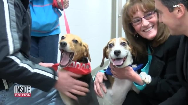 Truck Driver Calls 911 After Watching 2 Beagles Get Thrown Out Of A Moving Car On The Highway