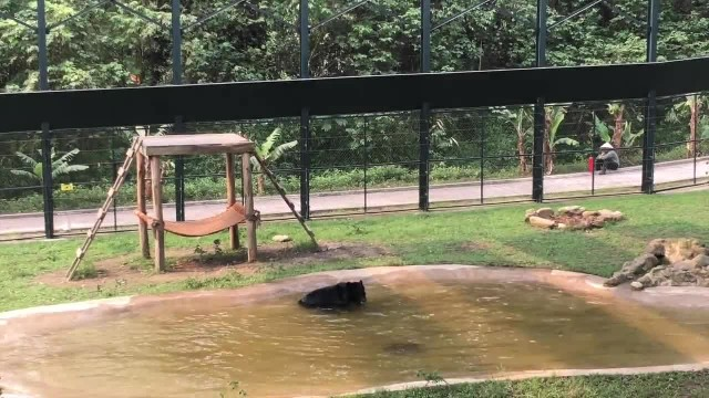 Bear who spent 9 years in 'torture vest' can't contain excitement when seeing water first time