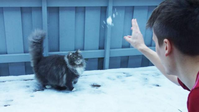 Man lets his cat out to discover the snow, but her reaction is