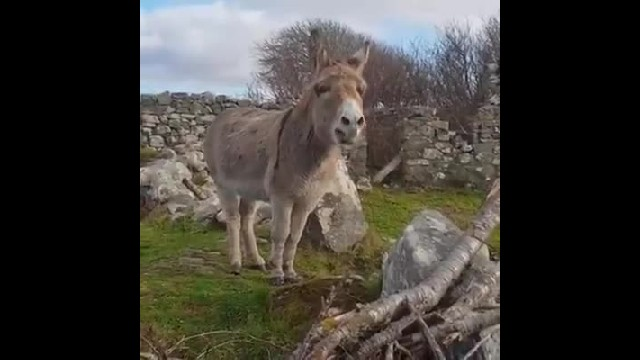 Rescued Donkey Is Winning Hearts On Internet With Her Singing
