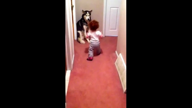 Baby Is Terrified By Vacuum's Screeching, Adorably Runs Towards Dog For Support