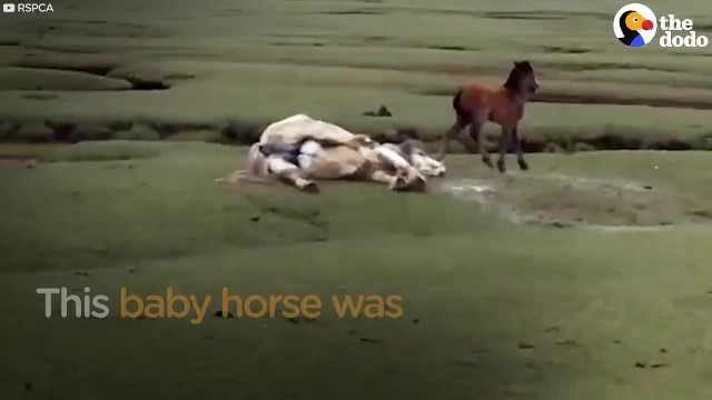 Baby Horse Refuses To Leave Mom's Side. Rescuers Realize They Have To Act Fast