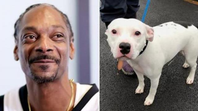 Snoop Dogg offers home to 'Snoop,' the dog abandoned just before Christmas in a heartbreaking video
