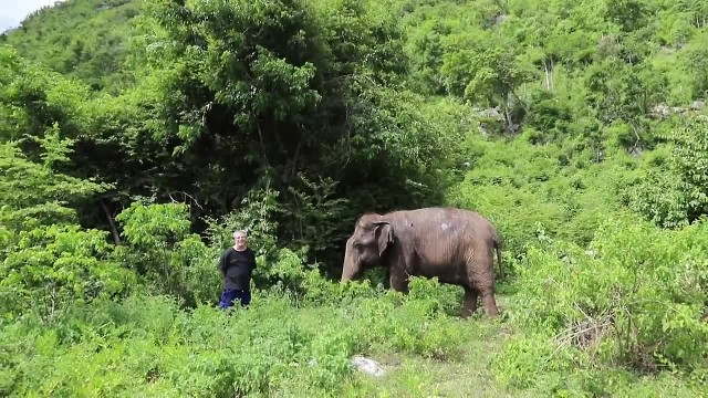 Blind Elephant Stops In Tracks As Man Plays Piano. Then Her Behaviour Instantly Changes.