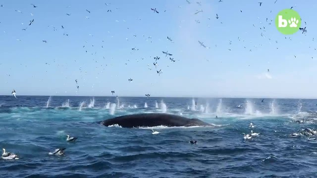 Diver finds himself inside the mouth of massive whale