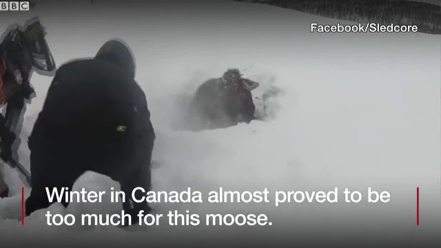 Friends snowmobiling suddenly spot a black dot in the snow, walk closer and realize it's moving