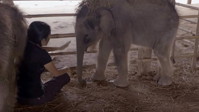 Baby elephants who are too scared to sleep, find peace when they