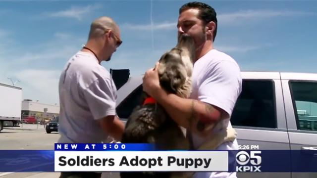 Army soldier gets the sweetest reunion with the pup he fell in love with on his deployment