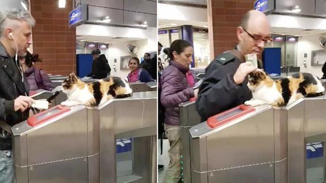 Street cat greets hundreds of train commuters every single day