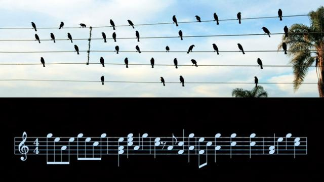 Brazilian composer turns picture of birds sitting on wires into a stunning musical piece