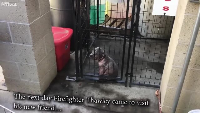 Firefighter rescues pup but can't stand leaving him behind, so he saves his life once more
