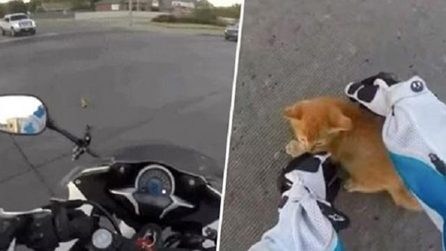 Hero biker jumps from motorbike to rescue tiny kitten on busy road