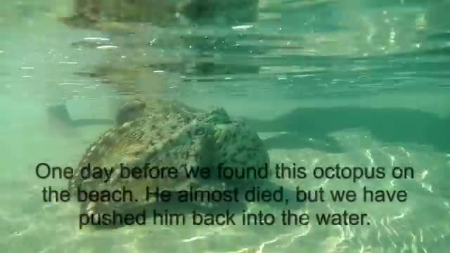 Rescued octopus returns to give beautiful thank you