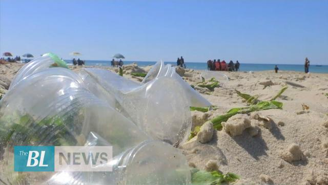 Biodegradable plastic made from seaweed organisms