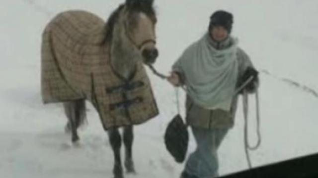Semi driver spots girl with horse out truck window after icy roads leave him stranded overnight