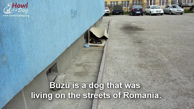 People confused why dog won't stop following, then they realize he desperately needs help