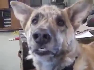 'Talking' dog has hilarious conversation about food