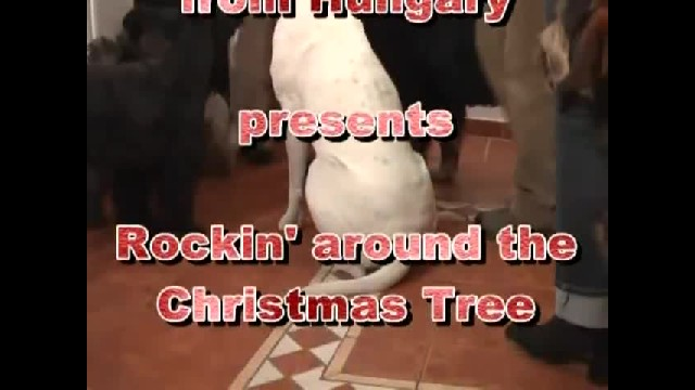 Dogs Take It Upon Themselves To Decorate For Christmas When Left Home Alone