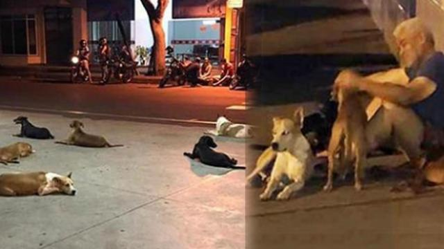 Six faithful canines chase ambulance with owner for several miles, spend hours waiting outside hospi