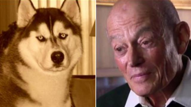 Grandpa gets call that his lost husky has been found after two years of begging strangers for help