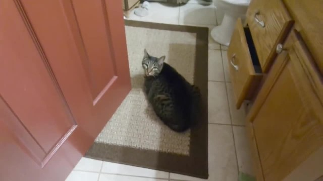 Cat waited everyday for her blind friend, until he finally shows up