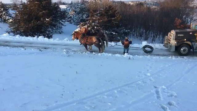 Two horses save a semi truck stuck on an icy hill