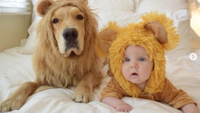 Adorable Golden Retriever can't stop cuddling new addition to the family