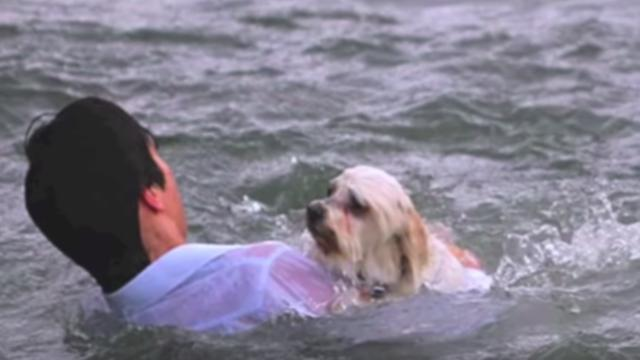 The dramatic moment man scattering grandmother's ashes jumped off pier to rescue drowning dog