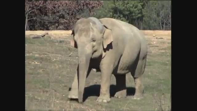 Elephant waits weeks for doggy best friend to return - just watch the moment he sneaks round the cor