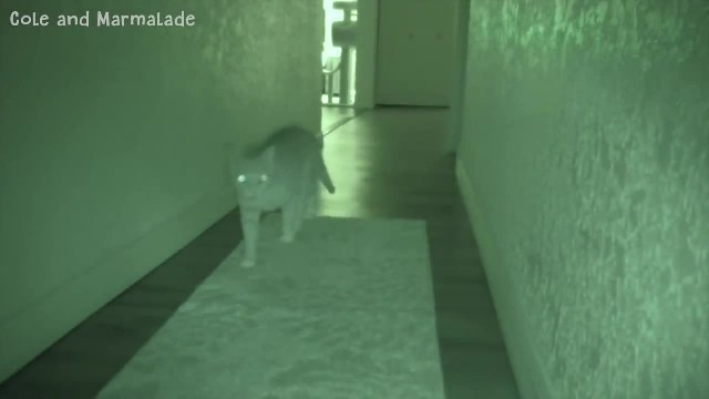 Night Vision Camera Captures How Four Cats Entertain Themselves While Their Humans Are Sleeping at N