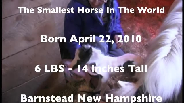 She Owns The Smallest Horse On The Planet With The Biggest Heart