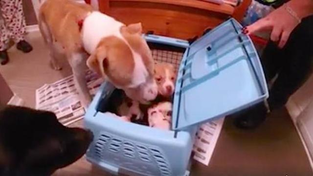 They reunite a broken-hearted mom with her lost babies, now watch her reaction...
