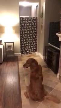 Dog's reaction to soldier owner coming home is heartwarming