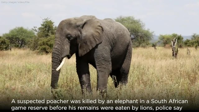 Biting back! South African poacher killed on the hunt for trophies