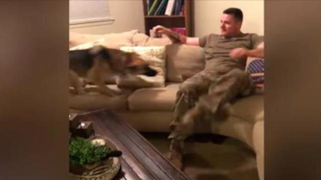 German shepherd thought soldier dad abandoned her. She held nothing back on day of reunion