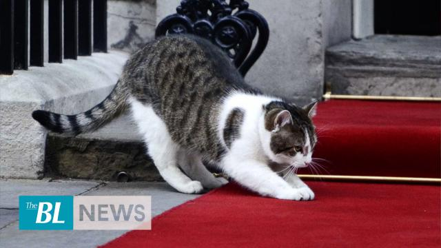 UK's 'chief mouser' expects to keep job
