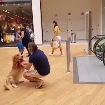 Dog gets scared and refuses to go up escalator – so man carries it like baby