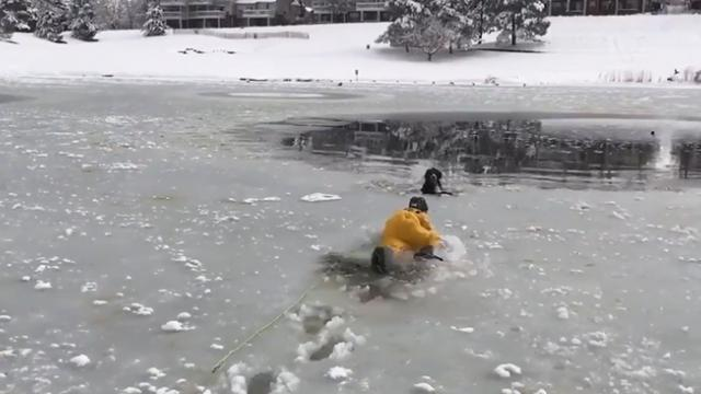 Dog rescued after falling through icy pond near Denver