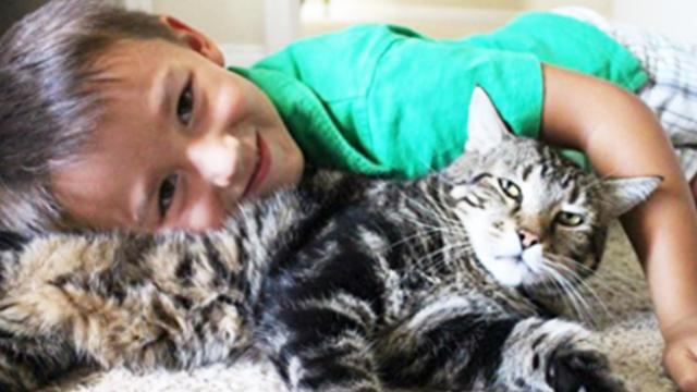 Little boy survives vicious attack after his trusty cat takes the situation into her own paws
