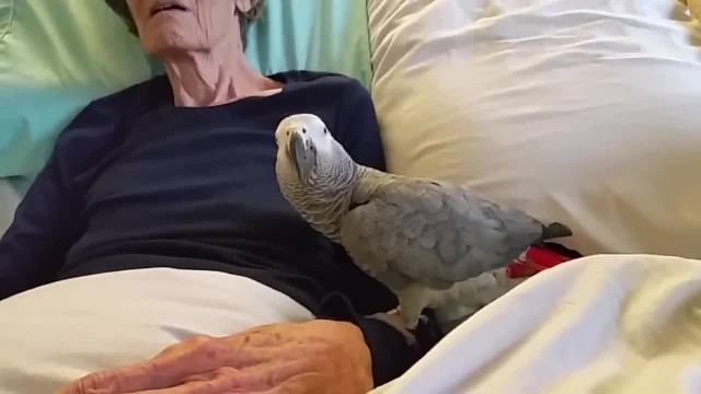 Dying woman says final goodbye to her parrot: The bird's instant reaction leaves me in tears