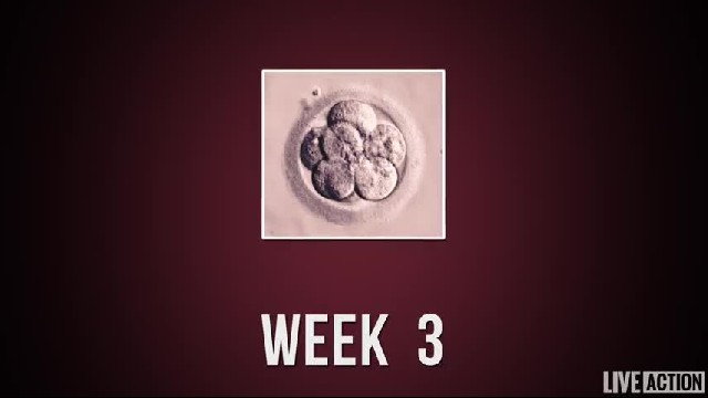 Baby Development Week by Week