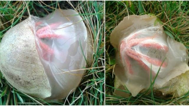 Woman records mysterious egg hatching in her backyard, but there wasn't a bird inside