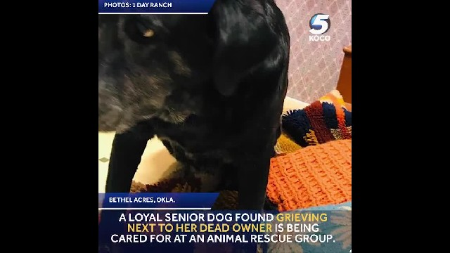 Dog Believed To Be 20 Years Old Found Grieving Next to Owner's Body
