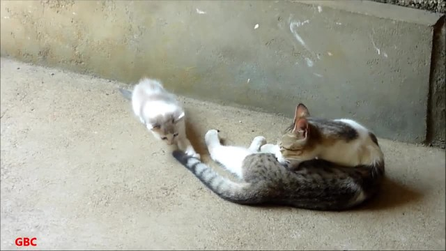 KITTEN STARTS MEOWING FOR HELP, THEN THE DOG HEARS HER CRIES. NOW WATCH HOW HE ANSWERS